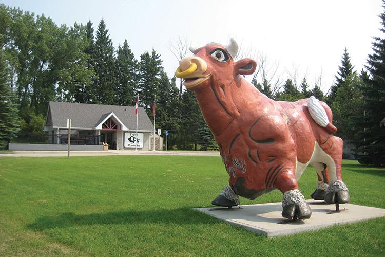 Arthur-The-Bull-Russell-Manitoba