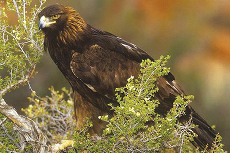 Birding-Tours-Russell